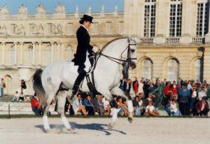 GSpartacus haras du coussoul vaisse etalon chevaux